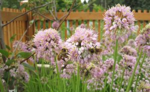 Gardening in a Changing Climate @ Private event - online webinar