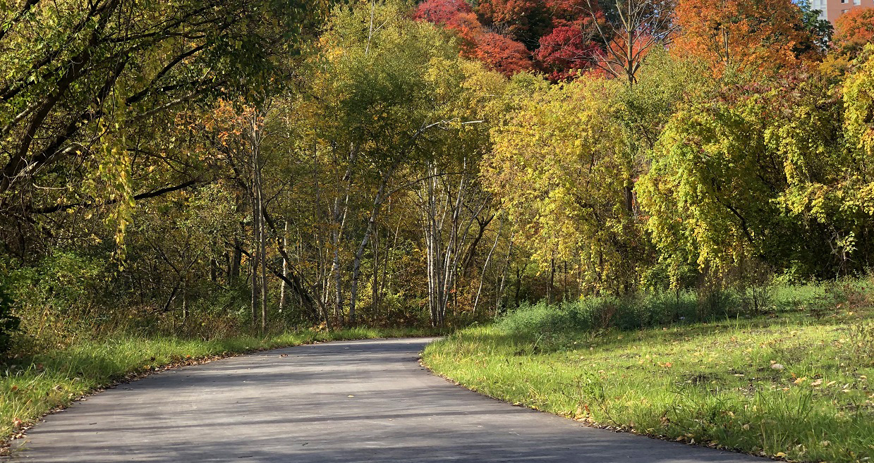 trees displaying fall colours line a portion of the completed East Don Trail phase two