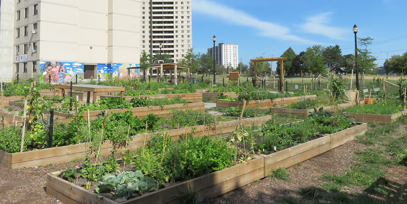 community vegetable garden at San Romanoway Towers