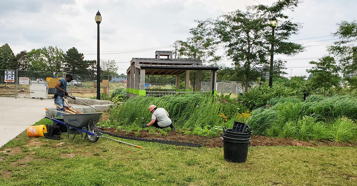 San Romanoway Towers residents tend to pollinator garden