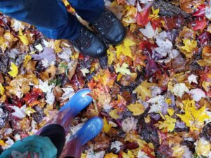 Nature in Your Classroom - Fall Changes @ Online