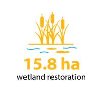 15.8 hectares of wetland restoration