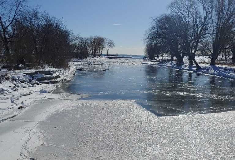 a fragile layer of ice covers the water at Marie Curtis Park