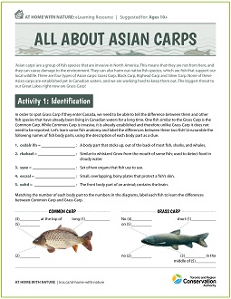 All About Asian Carps e-learning worksheet