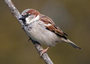 Bird Sounds: Understanding your Feathered Friends @ Online