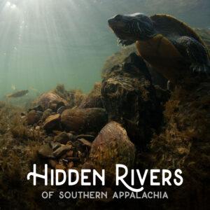 Hidden River fish illustration