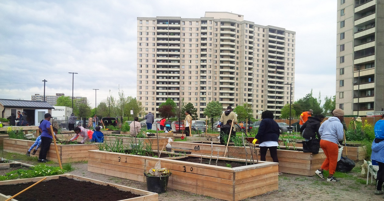 residents tend to a community garden in the outdoor space of a multi-unit residential building