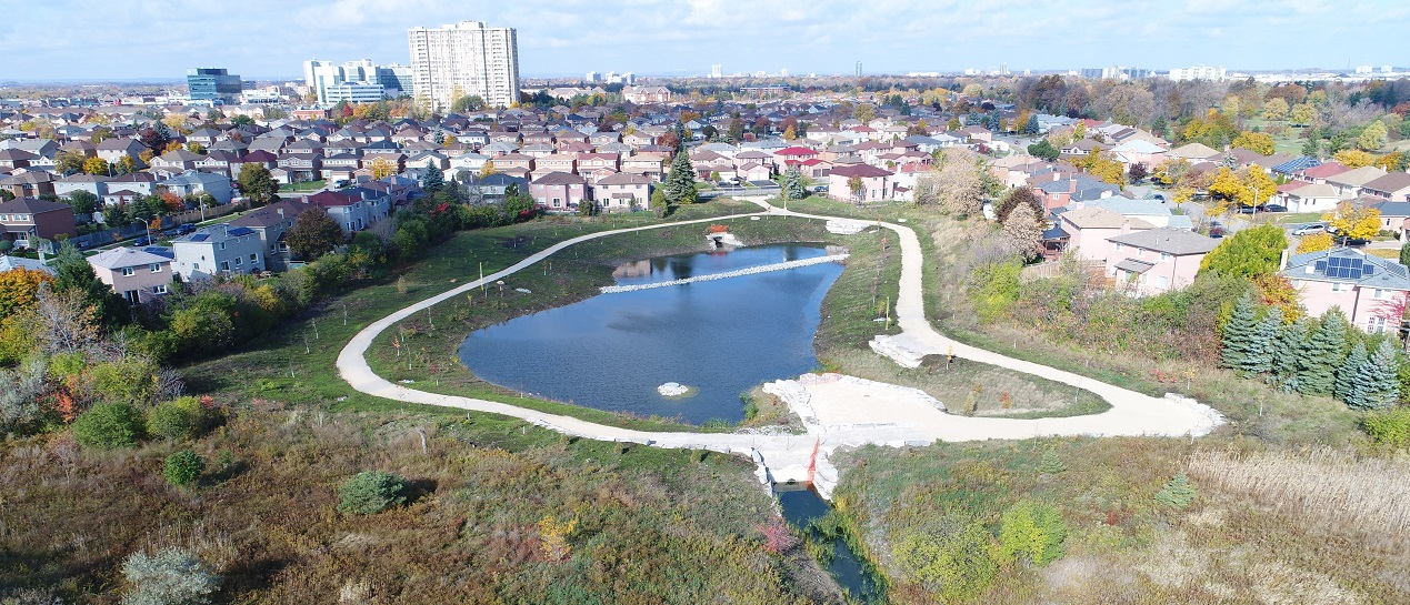 previously fenced-off dry pond in County Court neighbourhood features a walking trail and naturalization plantings
