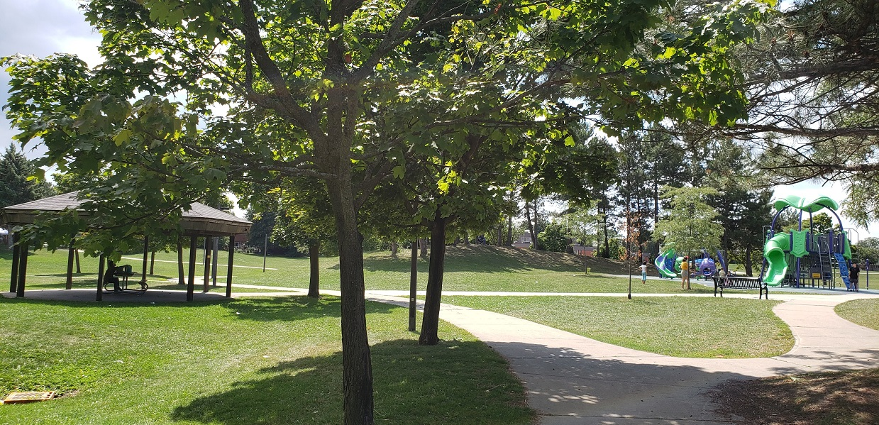 the vision for the redevelopment of York Hill Park is described as a cultivated wilderness