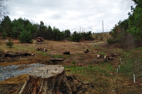 restoration of Bayview wetlands area underway in Oak Ridges Corridor Conservation Reserve
