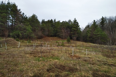 addition of woody habitat features to Bayview wetlands area of Oak Ridges Conservation Reserve