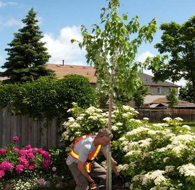 the Green Home Program underway in the County Court SNAP neighbourhood