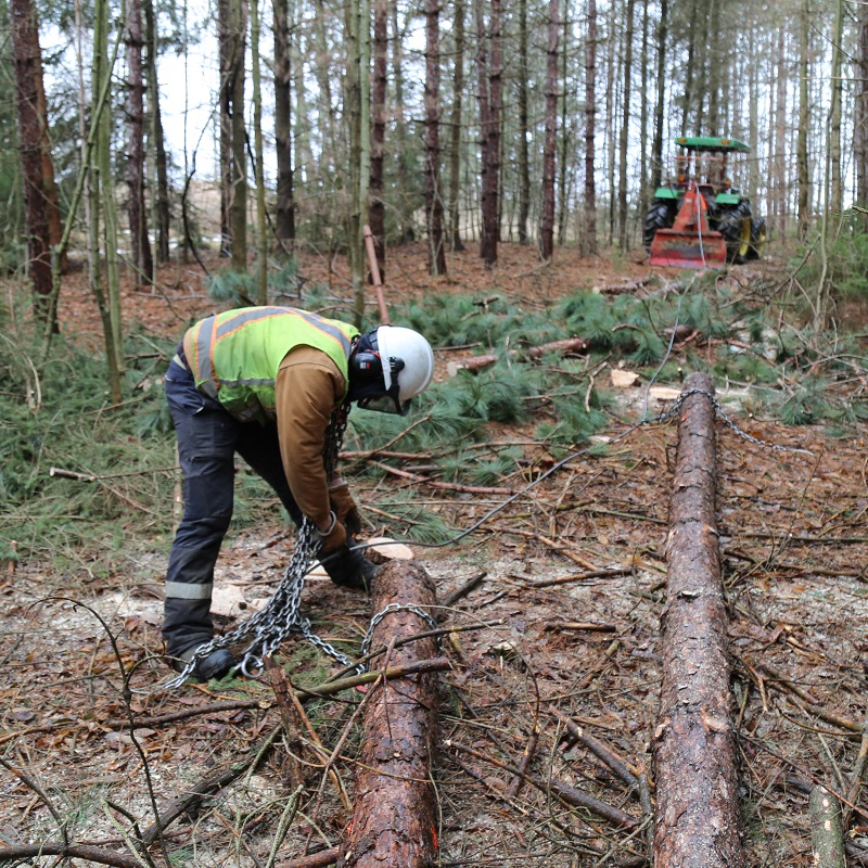 TRCA Forestry field staff conduct on-site management of forest plantation