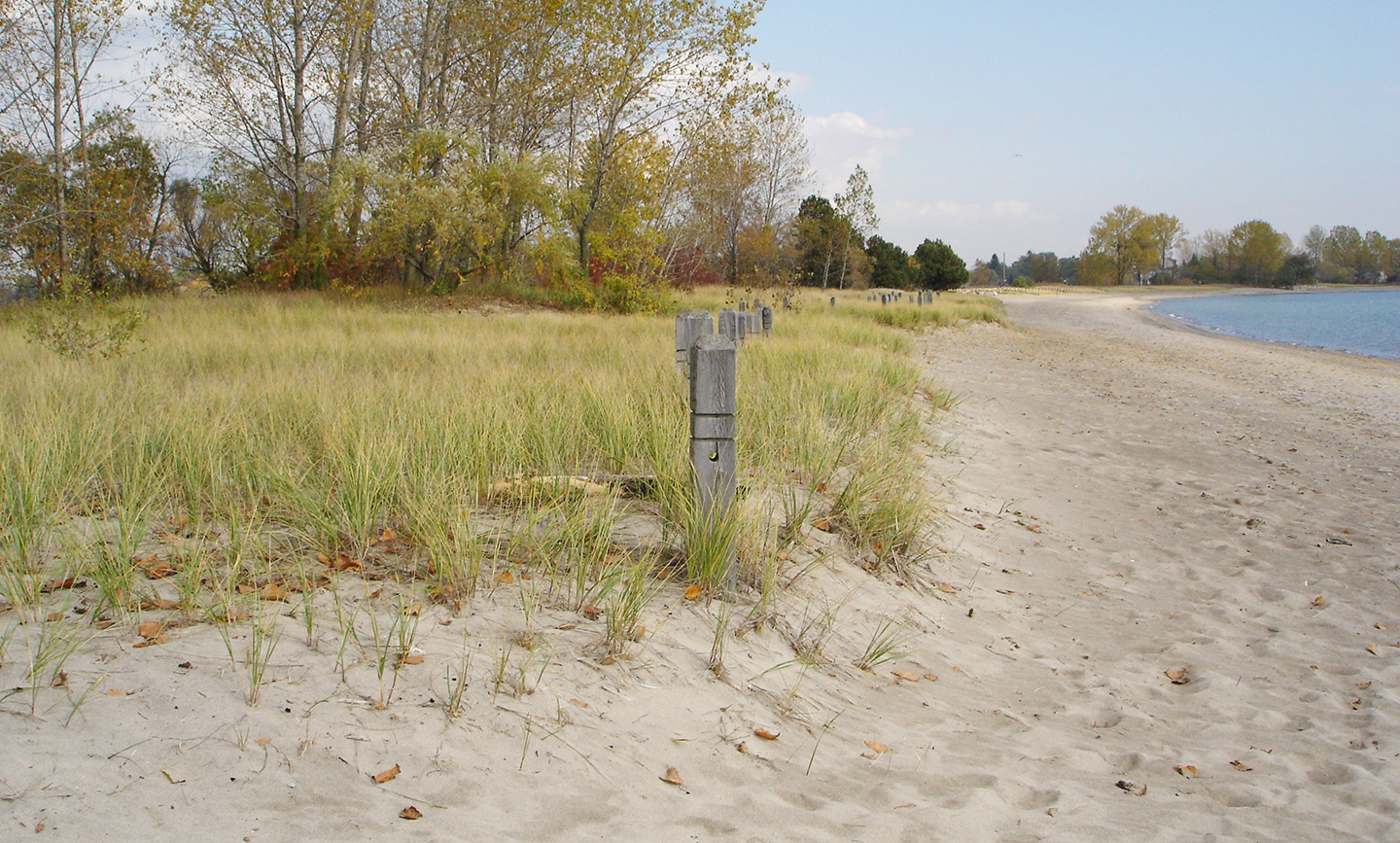 completed sand dune at Gibraltar Point