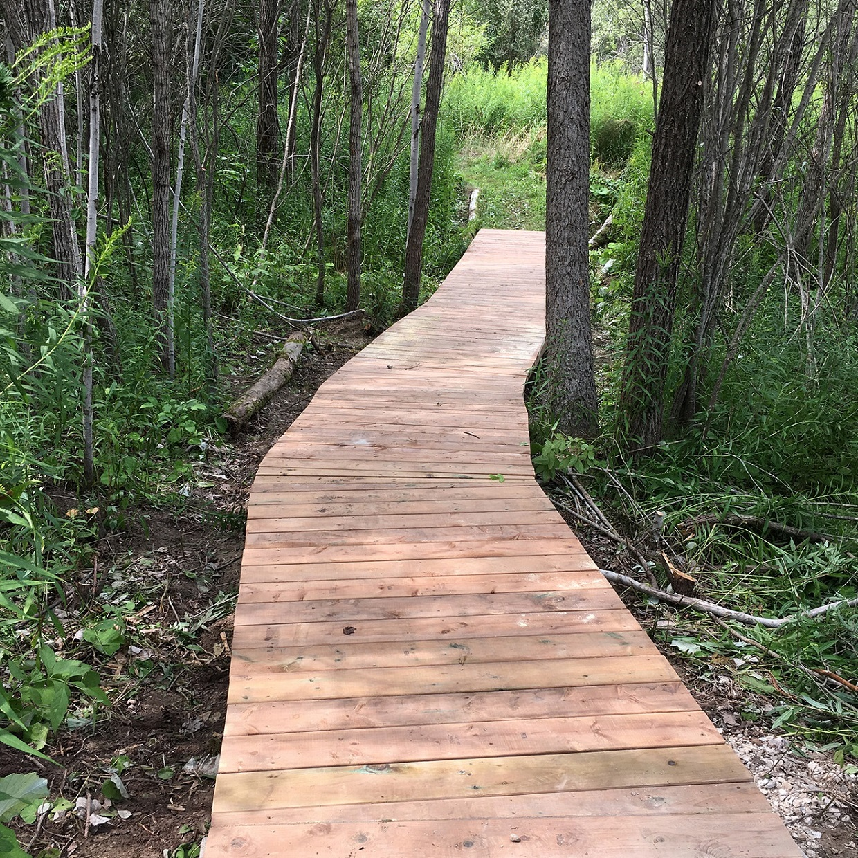 forest trail boardwalk constructed by participants in TRCA Girls Can Too program