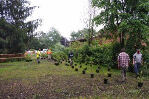 Tree planting and stewardship at Saigeon Trail @ Saigeon Trail