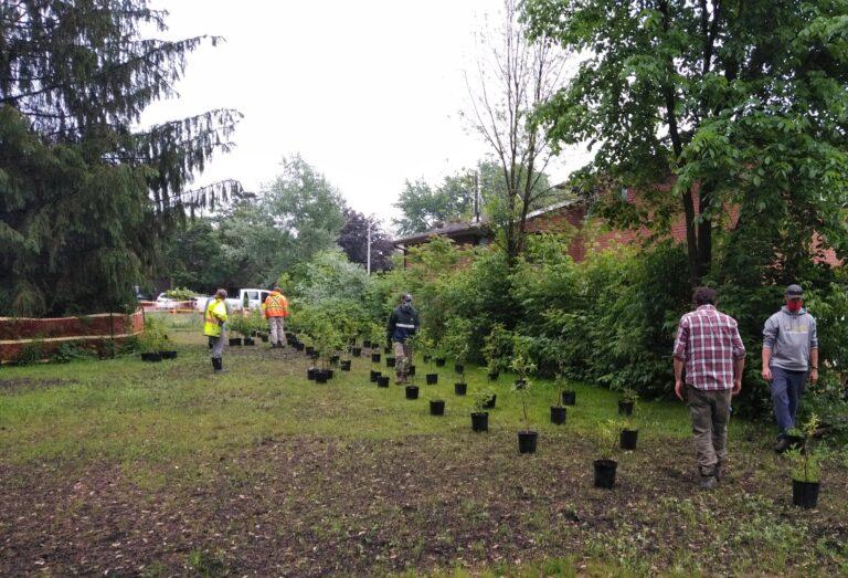 TRCA staff installing restoration plants in Grist Mill Park.