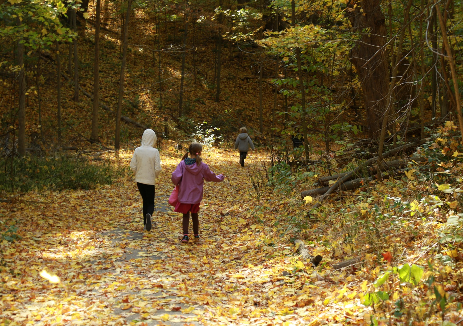 students explore trail during PA day camp at Kortright Centre for Conservation