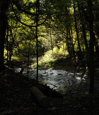 forest at Claremont Nature Center after dark