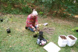 Fall Native Tree and Shrub Planting with the Friends of Humber Bay Park