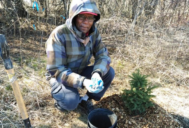 A volunteer planting a tree