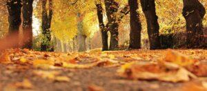 Parkdale Nature Walks @ Masaryk-Cowan Community Recreation Centre
