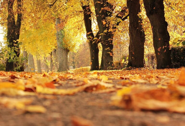 trail lined with trees displaying colourful autumn leaves